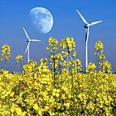 Moon over wind turbines in a field