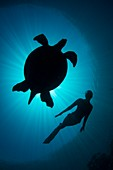 Free diver with a turtle