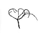 Branching plant stem,X-ray