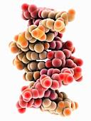 UV-damaged DNA molecule