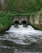 Sewage effluent