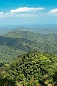 Northern Range forests,Trinidad