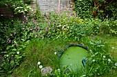 Wildlife-friendly garden,UK