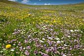 Wildflowers on a mountainside
