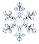 Snowflake,light micrograph