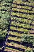 Terraced fields in Madeira