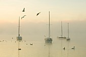 A misty morning over Lake Windermere,UK