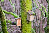 Bat boxes in the Forest of Bowland,UK