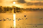 A misty dawn on Lake Windermere,UK