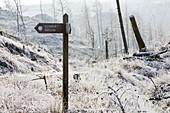 Hoar frost on vegetation