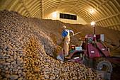 Potato farming,Idaho,USA