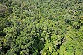 Daintree rainforest,Australia
