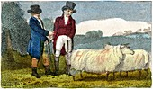 Farmers discussing Dishley sheep