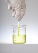 Home urine test