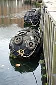 Dock buoys