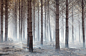 Smouldering woodland after wildfire
