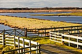 Martin Mere bird reserve,UK