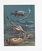 Prehistoric marine life,illustration