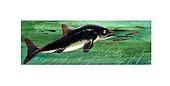 Ichthyosaurus marine dinosaur