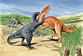 Baryonyx dinosaur fighting,illustration