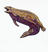 Placodus prehistoric marine reptile