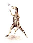 Saurornithoides dinosaur,illustration