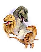 Tyrannosaurs,illustration