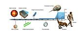 Evolution of Earth timeline,illustration