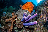 Sponges and coral on a reef