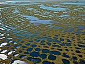 Patterned ground,Lena Delta,Siberia