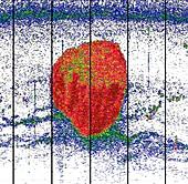 Krill ball,echogram