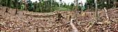 Rainforest cleared to plant crop,Ecuador