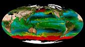 Ocean phytoplankton types,global map