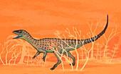 Eoraptor dinosaur,illustration