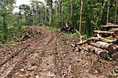 New road cut through tropical rainforest