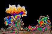 Dopamine drug crystals,light micrograph