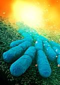 Bacteria,illustration