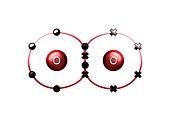 Bond formation in oxygen molecule