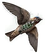 Swallow drone robotics,illustration