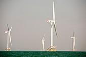 The Ormonde Offshore Wind Farm,UK