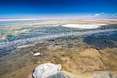 Laguna Chaxa,Atacama Desert,Chile