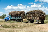 Loaded sugar cane truck Cuba