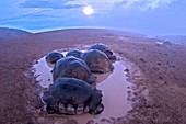 Giant Galapagos Tortoise Volcano night