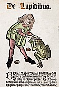 1491 Toad Bezoar stone Hortus Sanitatis