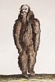 1725 1844 Living naked mandrake plant