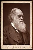 1874 Charles Darwin photograph portrait