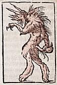 1554 Munster lycanthrope werewolf demon