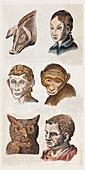 1590 Della Porta Animal Human Physiognomy