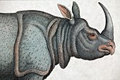 1823 Indian Rhinoceros colour engraving