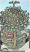 1491 Bausor sleep tree Hortus Sanitatis